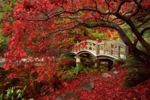 شوفو حدائق اليابان :) موحدائفنا :( 961103JapanesGarden